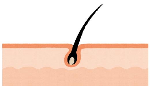 どうして脱毛期間は長くなるの?毛の成長のサイクル「毛周期」を解説